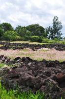 2011_hawaii_3_20.jpg