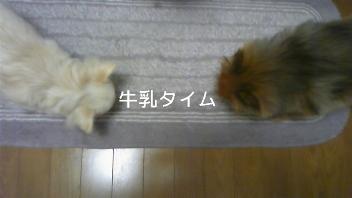 ゆき☆かんな