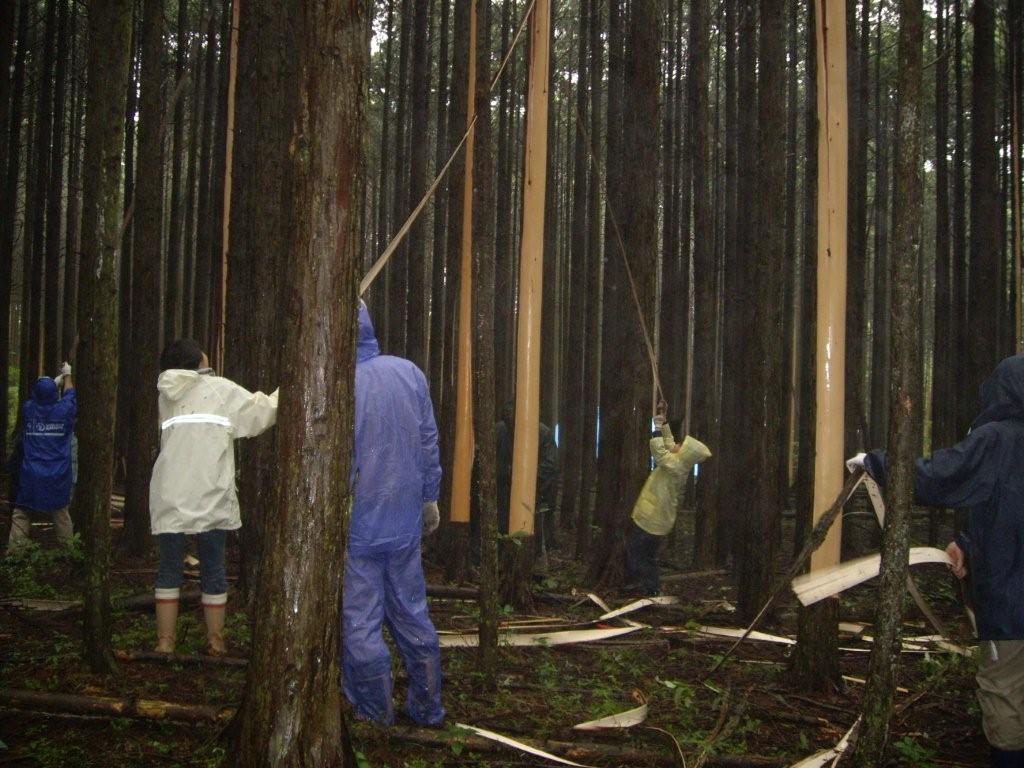 北山いこいの森平成19年5月の様子