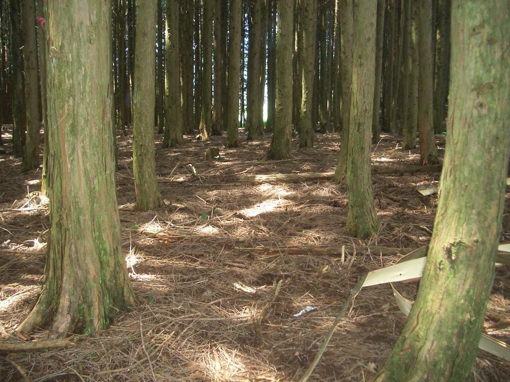 林床の様子
