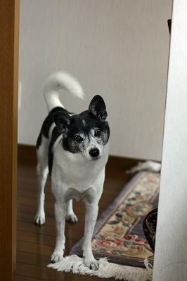 yuki (6)