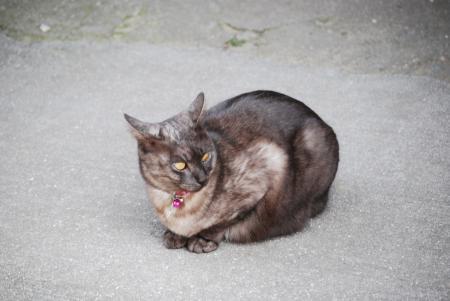 2374島猫