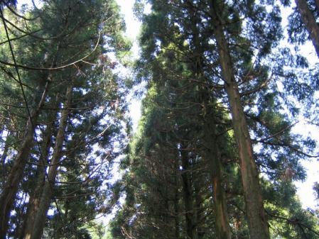 5455森林浴