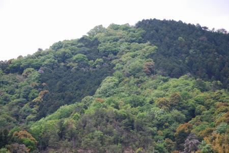 2604新緑の山