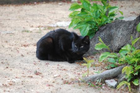 2585黒猫