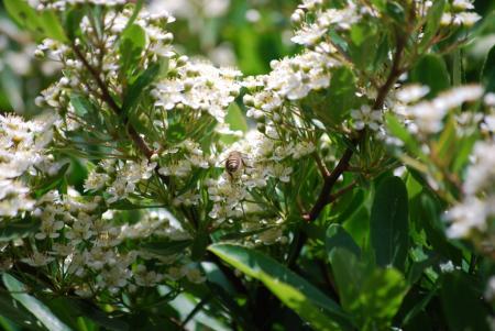 2644ミツバチ