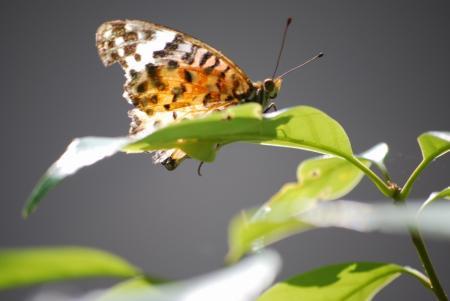 2665蝶