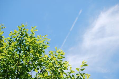 2655飛行機雲