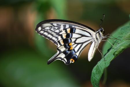 3053庭に来る蝶