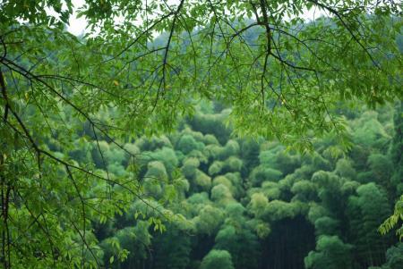 3210森茂る
