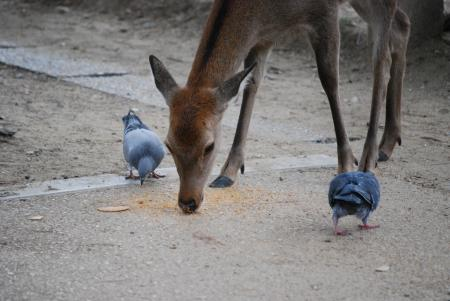 3425鹿と鳩