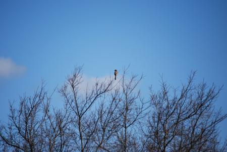 0849木立に野鳥
