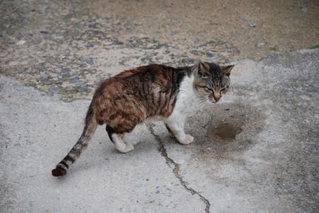 0945島猫