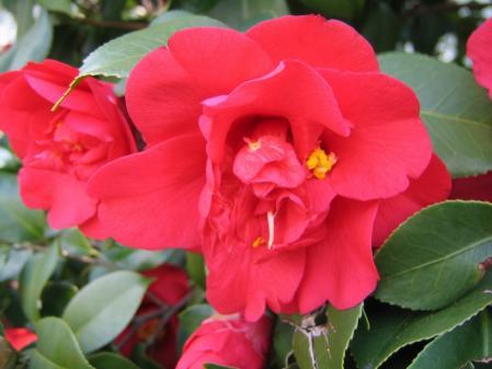 5225三虎に咲く花