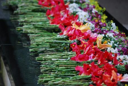 3840献花