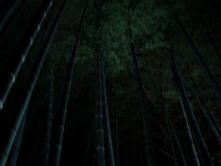 0032孤独な竹林