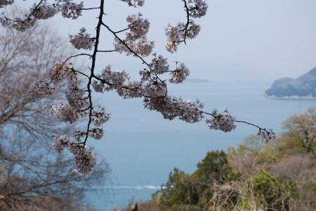 2434野鳥の森の桜