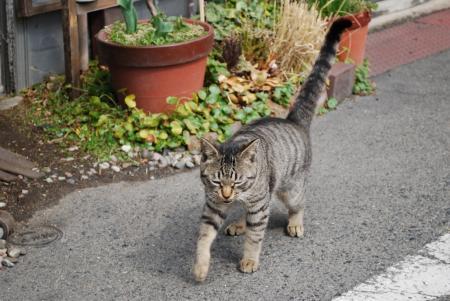 4138散歩猫