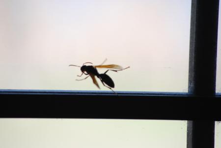 4513窓際のハチ