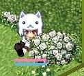 白バラと白薔薇