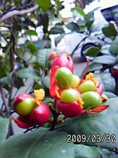 PA0_0015_20110311084346.jpg