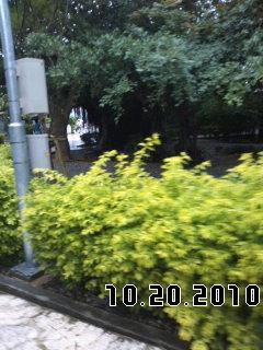 PA0_0017_20101129051827.jpg