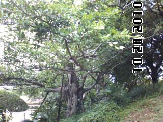PA0_0056_20110302093606.jpg