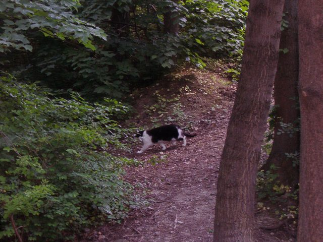 山を歩くネコ。