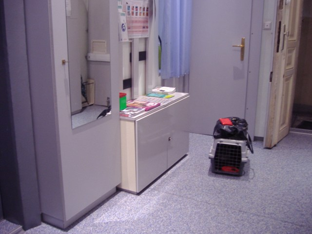 動物病院の待合室。