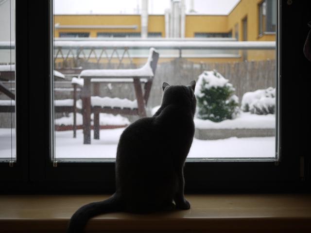 雪見するネコ。