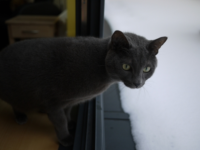 雪、積もったなぁ~。