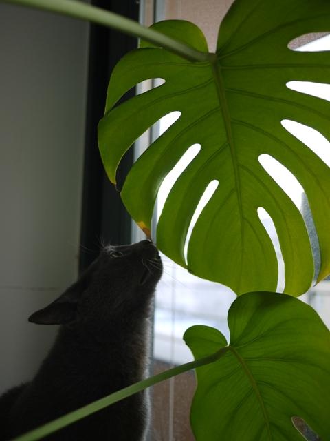 葉っぱとネコ。