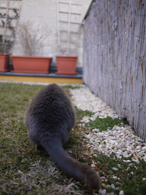 お庭散策♪