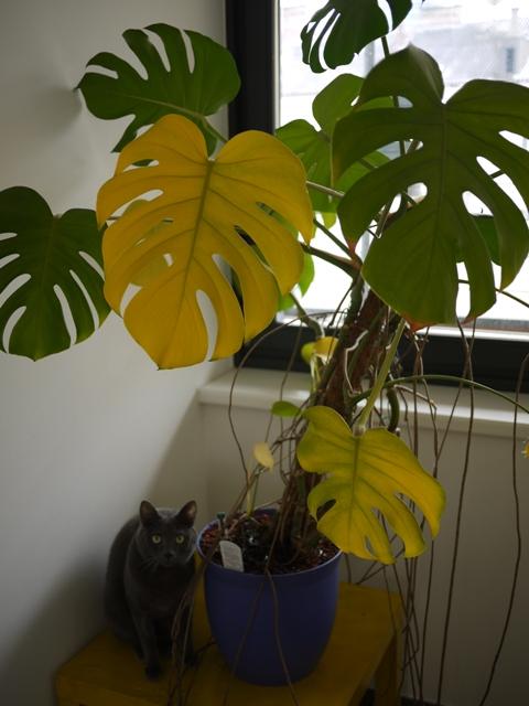 葉っぱが黄色。