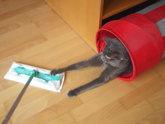 捕まえようとするネコ。