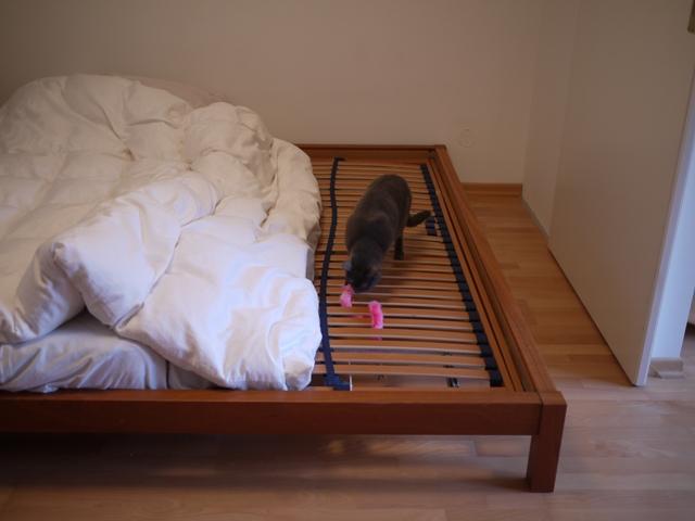 ベッドの下に、