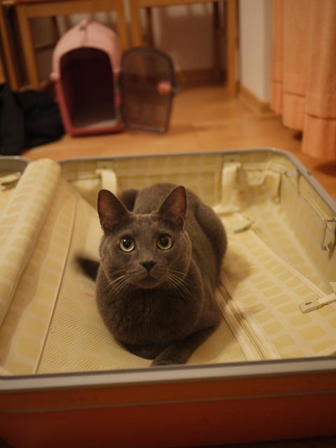 スーツケースとネコ。