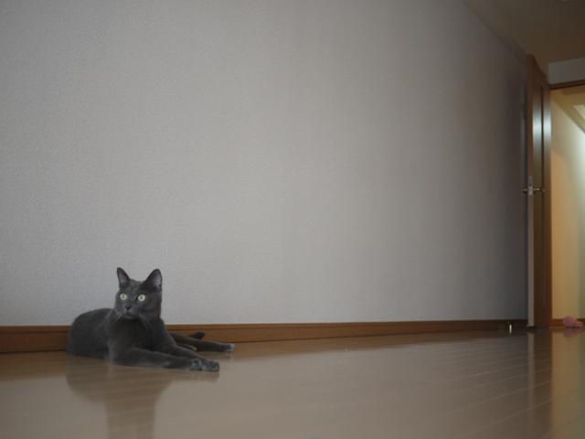 何にもないな、この部屋。