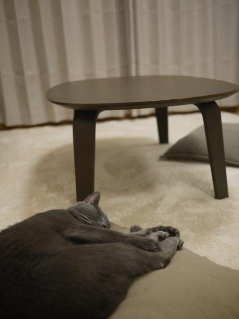 ちゃぶ台と座布団とネコ。