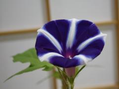 20090722-10.jpg