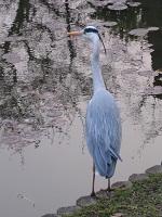 お堀端にたたずむ鳥