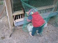 むーきんぐ鶏小屋で餌の移動中
