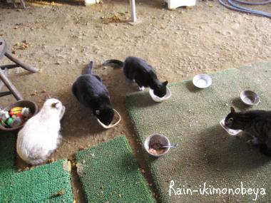 朝ご飯...