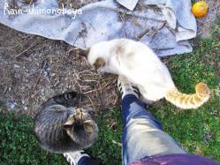 迎えに行くと猫って喜びます