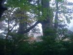 couple trees
