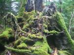 green mosses2