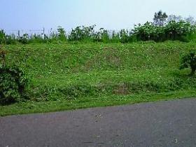 雑草アフター