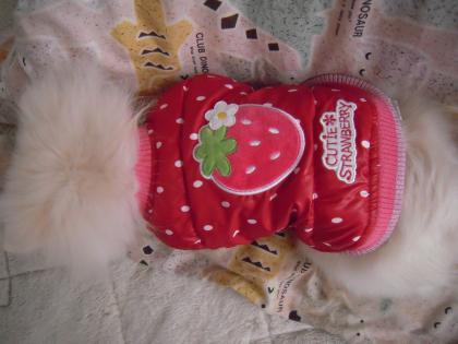 イチゴのベスト