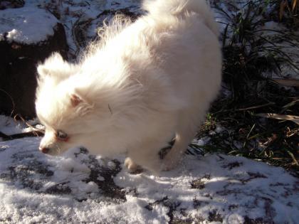 瑠妃、雪遊び