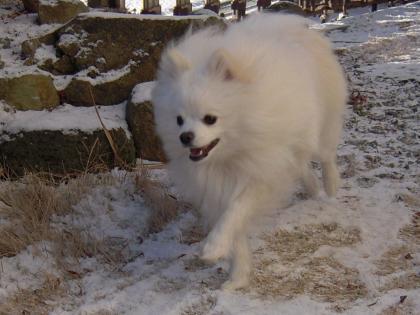 利温、雪の中走る